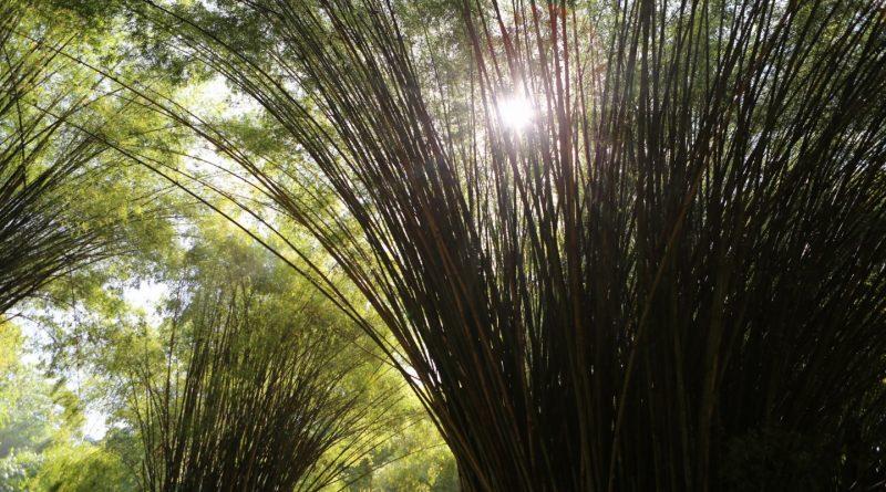 Gobierno se compromete a rescatar el Jardín Botánico Lancetilla